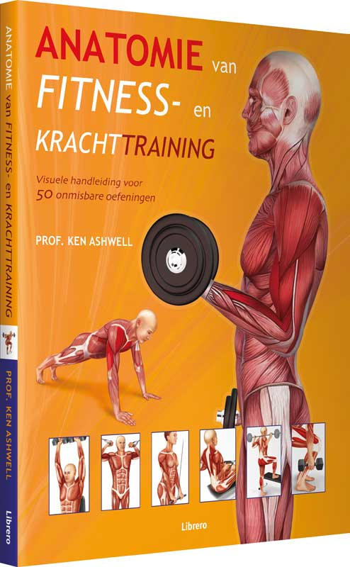 anatomie fitness en krachttraining