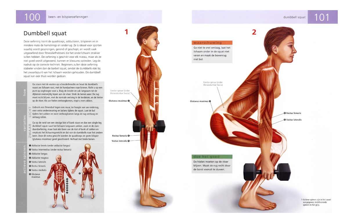 anatomie fitness